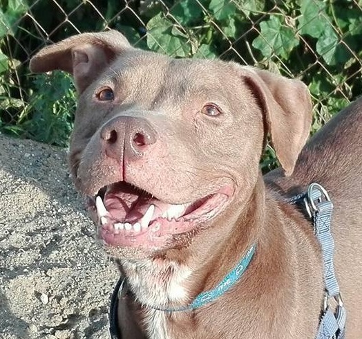 trinity perra para adoptar