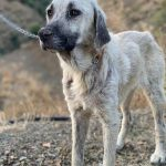 tundra perra en adopcion en la sonrisa peluda